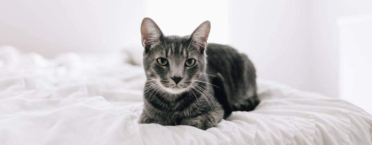 best cat beds