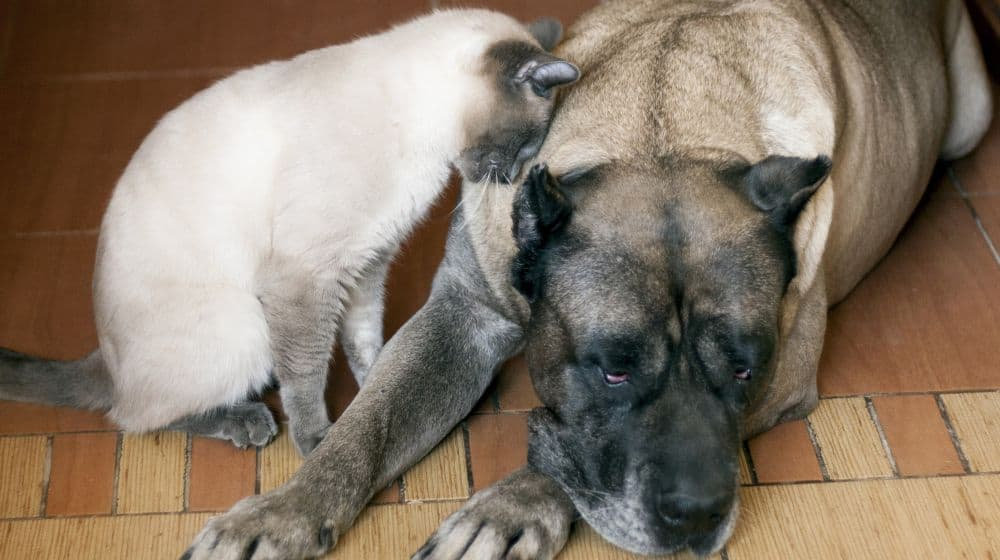 How To Maintain a Pet Friendly Home