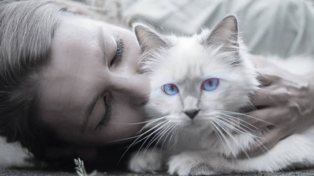 How to keep your cat happy