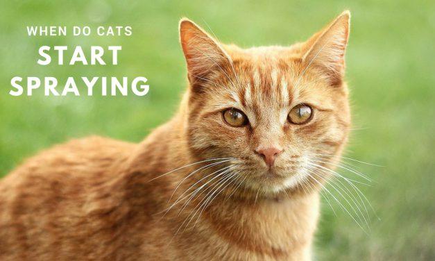 When Do Cats Start Spraying?
