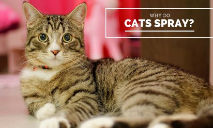 Why Do Cats Spray?