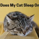 Why Does My Cat Sleep On Me?