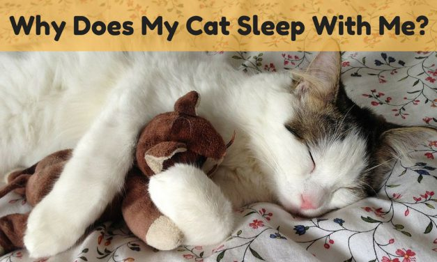 Why Does My Cat Sleep With Me?