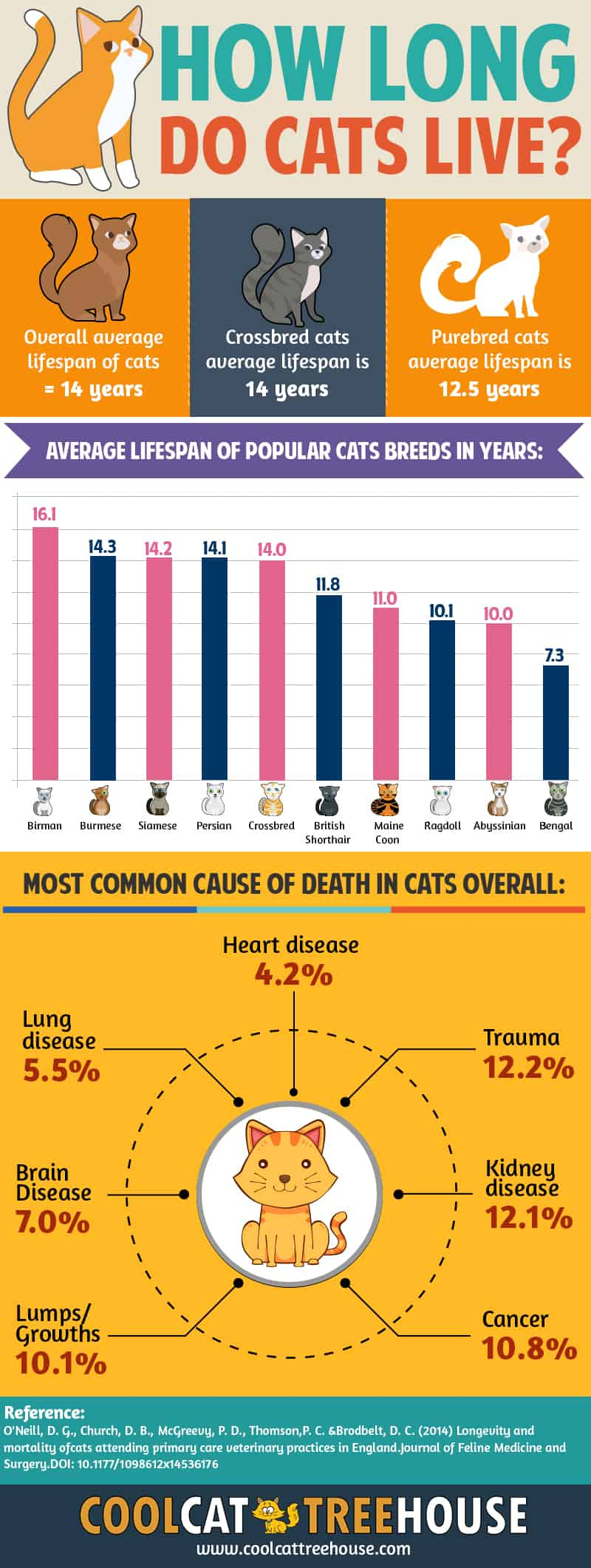 How Long Do Cats Live Facts About Cat Lifetime Cool