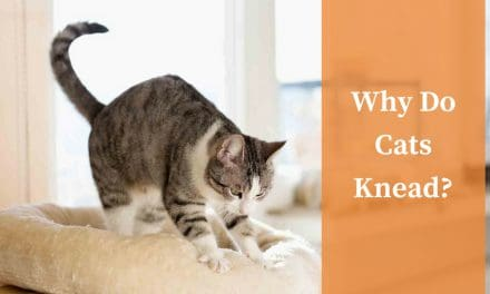 Why Do Cats Knead?