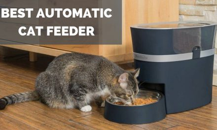 The Best Automatic Cat Feeder – Feeding Your Cat
