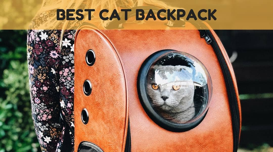 The Best Cat Backpack – Take Kitty With You