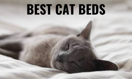 The Ten Best Cat Beds – Kitty Needs a Nap