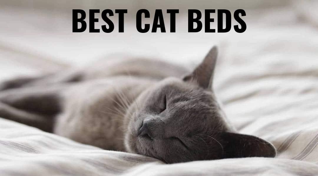 The Ten Best Cat Beds – Kitty Needs a Nap