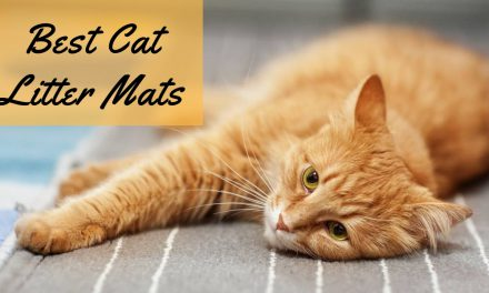 The Best Cat Litter Mat – No More Litter Trails