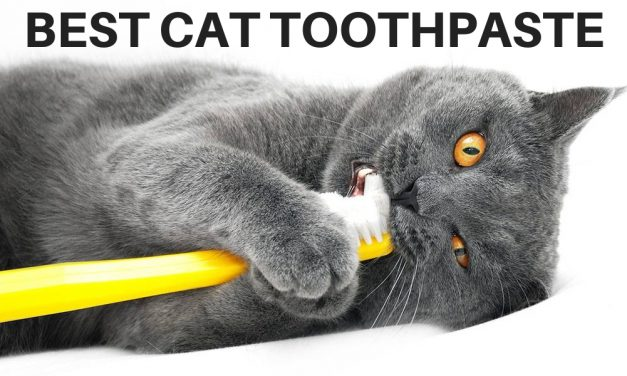 The Best Cat Toothpaste for Healthy Kitty Teeth