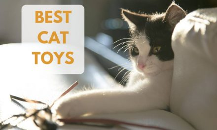 The Ten Best Cat Toys – Kitty Wants to Play