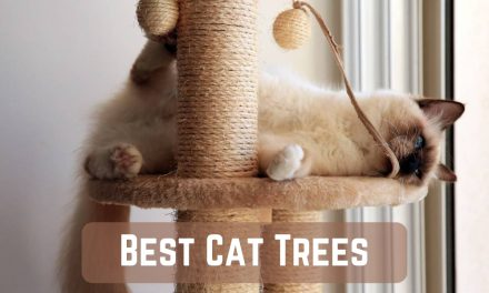 The Ten Best Cat Trees – Kitty Wants to Play