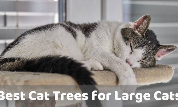 The Best Cat Trees for Large Cats – Kitty Playtime
