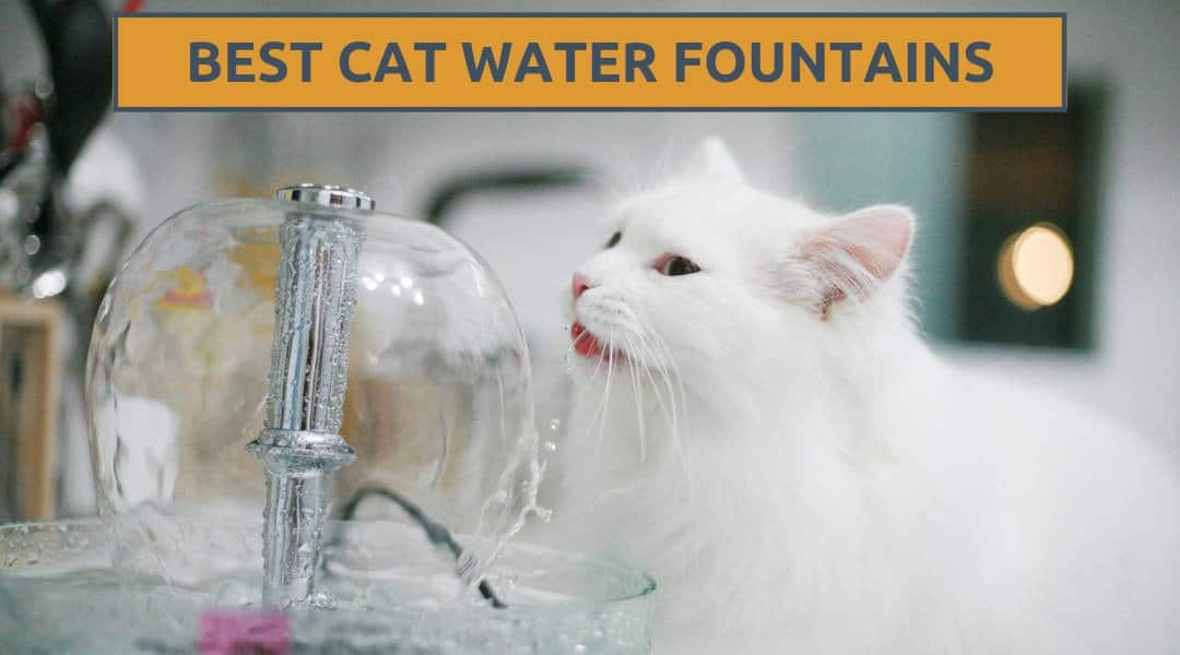 The Best Cat Water Fountains – Kitty Needs a Drink