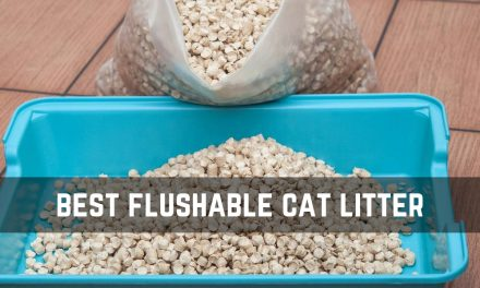 The Best Flushable Cat Litter for Easy Cleaning