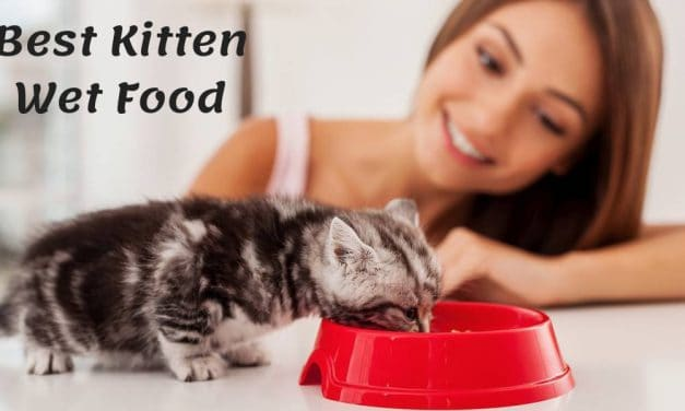 The Best Kitten Wet Food – Kitty Wants a Snack