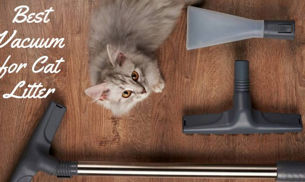 The Best Vacuum for Cat Litter – No More Mess