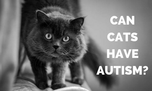 Cat Health – Can Cats Have Autism?